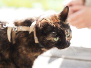 kissa valjaissa auringossa
