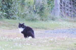 vapaana kulkeva kissa