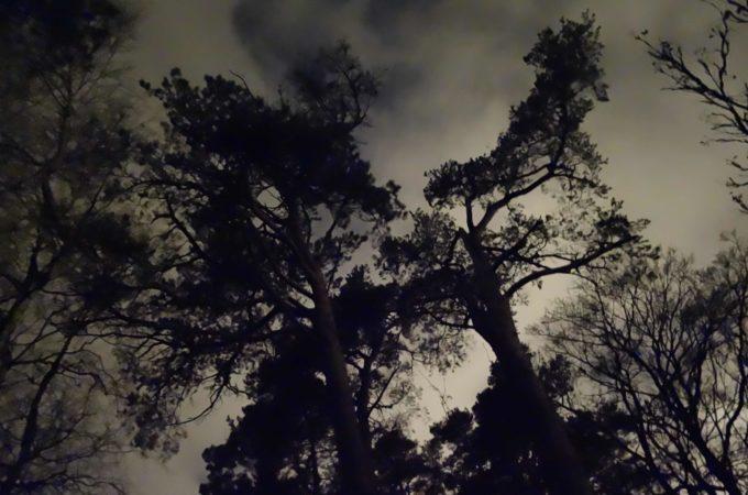illantumma mänty synkän pilvistä taivasta vasten