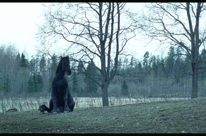 Outimaija Hakala: Hevosen muotokuva