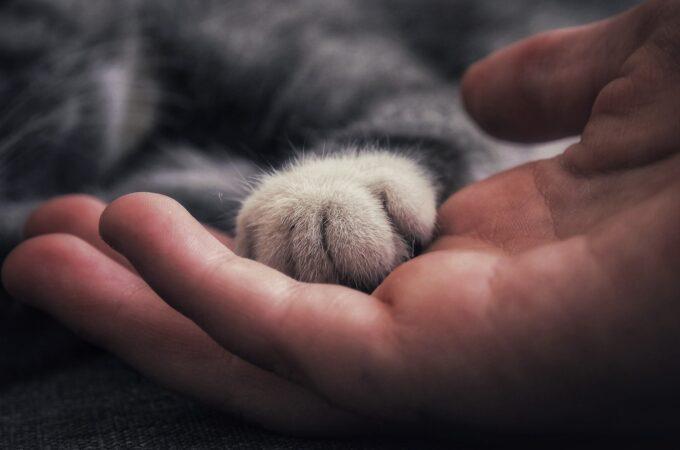 Kissadiplomatiaa – Neuvottelut yhteiselosta kissan kanssa