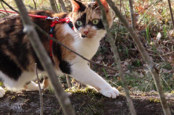 Kissapopulaatiot ja eläimen itseisarvon sivuuttava viranomaispolitiikka